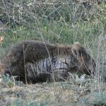 9 News interview on wombats with mange – June 2019