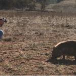 Australian Geographic – Wombat Rescue video